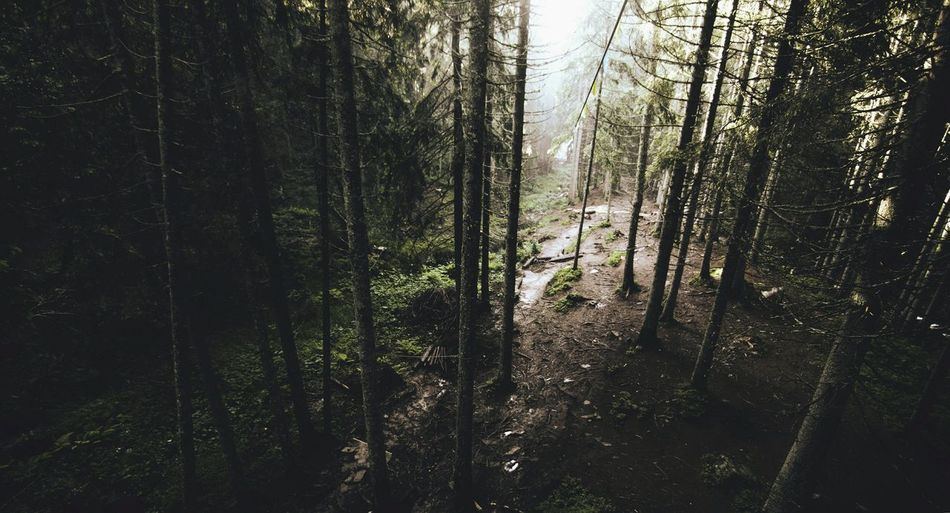 Scenic view of forest
