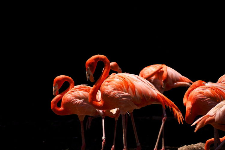 Flamingoes perching outdoors