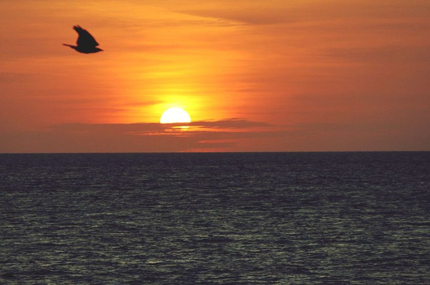 Perfect timing little guy :p Enjoying The Sunset Beach Ocean View Bird Sky On Fire Sunset