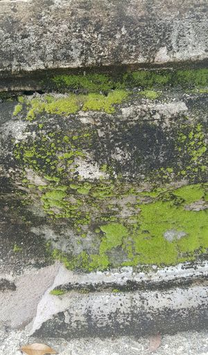 Mossy Cement