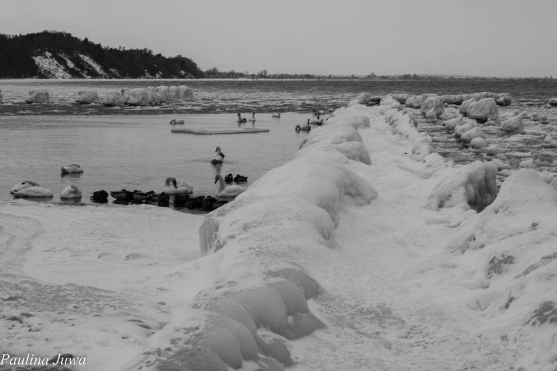 Sea And Sky Sea Poland Gdynia Wintertime Winter Birds EyeEmNewHere