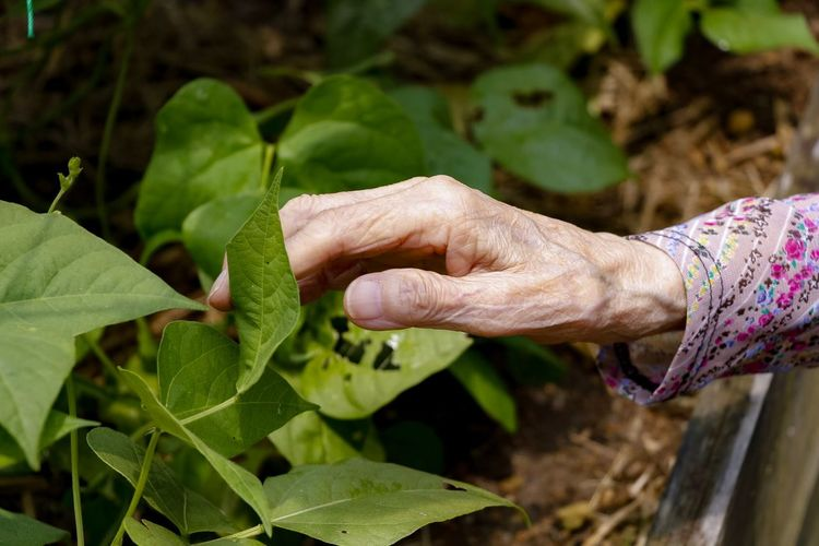 Hand Senior Adult Leaf Plant Part Human Body Part Hand Human Hand Real People Plant One Person Nature Women Growth Green Color