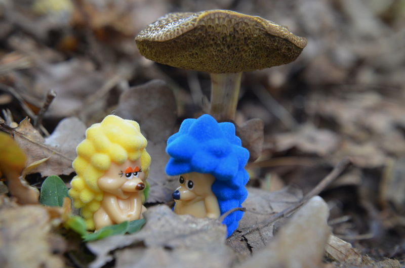 Wald In Raindorf Close-up Day Fly Agaric Food Food And Drink Fragility Freshness Fungus Growth Love Hedgehog Mushroom Nature No People Outdoors Toadstool