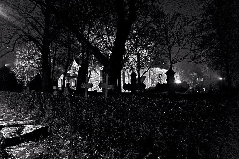Bare trees in the dark