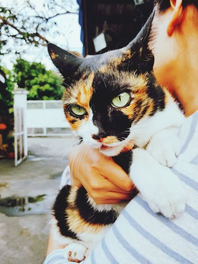 EyeEm Selects Pet Portraits Adult One Person Domestic Cat People Adults Only Portrait Young Adult One Woman Only Close-up One Young Woman Only Young Women Only Women Outdoors Human Body Part Day Women Pets Mammal Tri Color