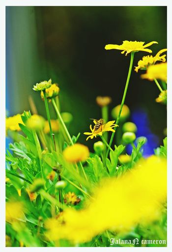 Flower Plant Nature Green Color Growth Uncultivated Yellow