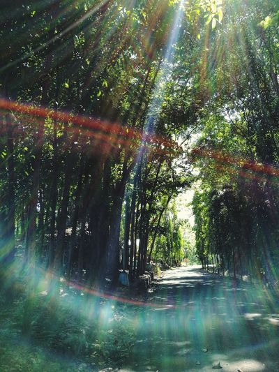 Mobilephotography Nature Beauty In Nature Freshness Tree Nature Green Color Sunray Of Light Sunrays Full Frame Cebu Philippines