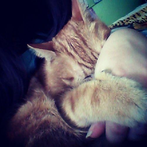 Darling ♡ Cat Kitty Love Instaphoto pet animal
