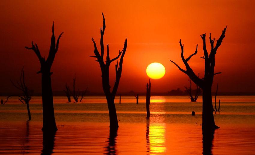 Silhouette bare trees against orange sky during sunset