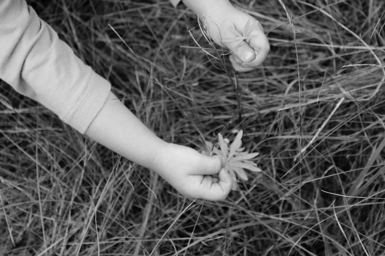 Black & White Black And White Blackandwhite Blackandwhite Photography Child Close-up Field Flowers Grass Hands Meadow Meadow Flowers Meadowlands Monochromatic Monochrome Nature Person Black And White Friday