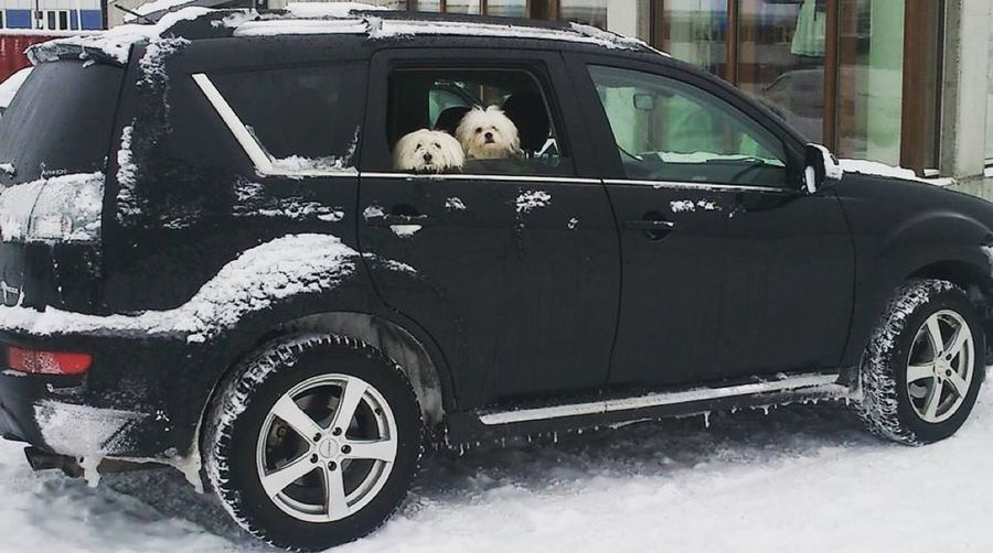 Snow Wintertime Icecold The Real Greenland Dogs Car Puppies Puppy Love Cute Puppies Puppylife