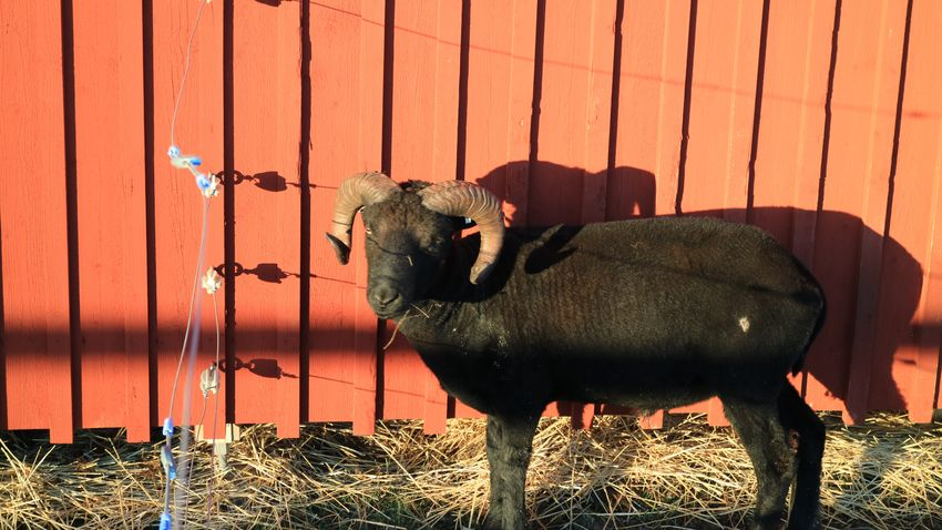 EyeEm Selects Animal Animal Themes Mammal Animal Representation Representation Wood - Material