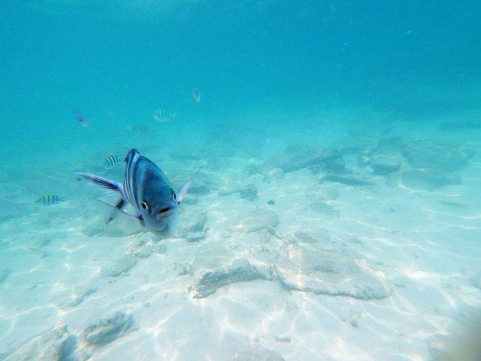 Fish Sea Ocean