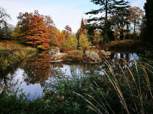 Postcode Postcards Tree Reflection Water Nature Growth No People Day Outdoors Lake Beauty In Nature Dinosaurs Victorian Park