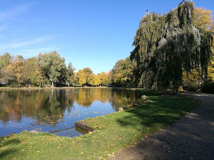 Tree Water Lake Reflection Clear Sky Sky