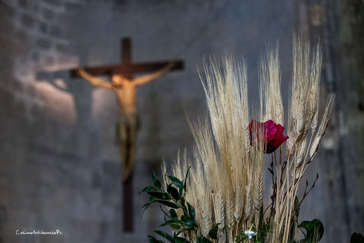 Particolare della Cattedrale di Casertavecchia Beauty In Nature Belief Close-up Cross Day Flower Flowering Plant Focus On Foreground Freshness Nature No People Outdoors Place Of Worship Plant Red Religion Spirituality Wood - Material