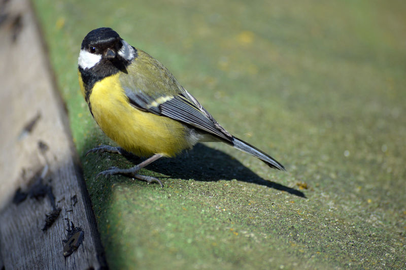 Close-up of bird perching on yellow outdoors