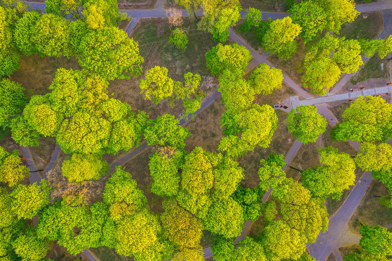 Drone  Aerial Aerial View Park Green Lithuania Lietuva Europe City Park Mavic 2 Pro Mavic 2 Plant Green Color Growth Beauty In Nature Tree High Angle View Day Nature Landscape Environment Scenics - Nature No People Land Forest Tranquility Tranquil Scene Outdoors Hedge