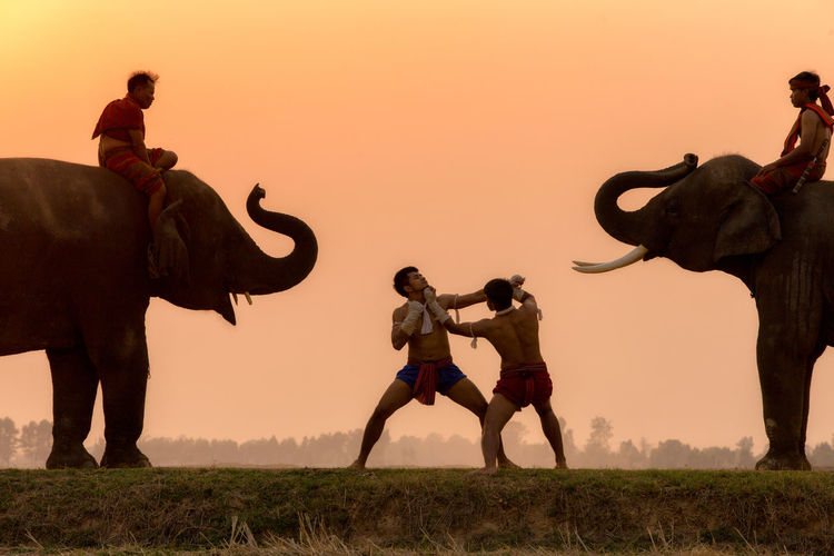 Silhouette fighter tradition Thai boxing or Muay-Thai outdoor battle with mahout and elephants, Ancient fighter on the world sport of Thai and around. Boxer Boxing MuayThai Thailand Action Animal Trunk Animal Wildlife Clear Sky Domestic Animals Elephant Elephants Full Length Group Of People Herbivorous Land Mahout Mammal Men Nature Orange Color Outdoors People Sky Sunset Vertebrate