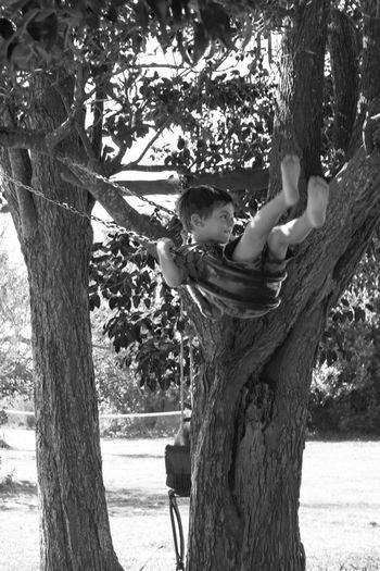 Swinging Kid Kid Swinging In A Tree Swinging Swing Tree Plant Leisure Activity Real People Lifestyles Tree Trunk Trunk