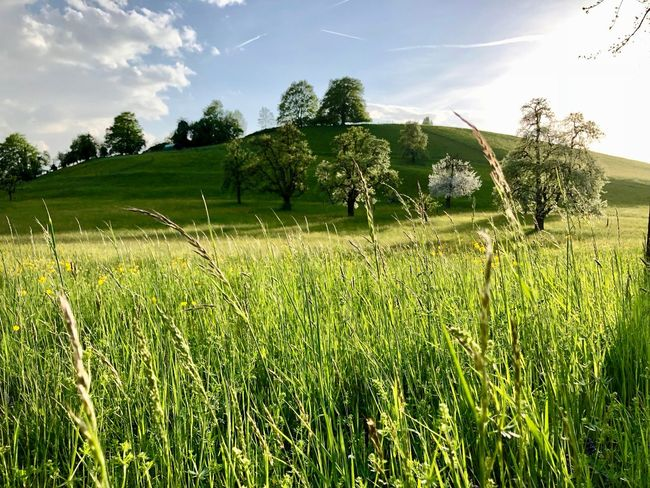 Springtime Grass HDR Beauty In Nature Cloud - Sky Field Grass Green Color Growth Hill Land Landscape Outdoors Plant Scenics - Nature Sky Tranquility Tree