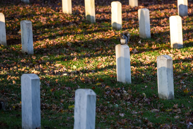 Arlington National Cemetery with Autumn Veterans day Grave Cemetery Memorial Tombstone Stone Religion Sadness Spirituality Grief No People Cross Belief Day Respect Solid Emotion Candle Stone Material Outdoors Architectural Column Squirell Arlington National Cemetery Veterans Day Soldiers' Graves Memorial Place
