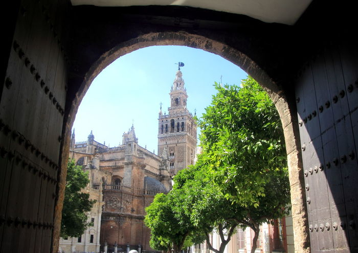 Architecture Travel Destinations Clock Tower Tree Bridge - Man Made Structure Government City Built Structure Cityscape Building Exterior Outdoors No People Clear Sky Day Politics And Government Clock Sky Clock Face Giralda Cathedral Giralda Tower Giralda Giralda De Sevilla Architectural Column Architecture Sevilla