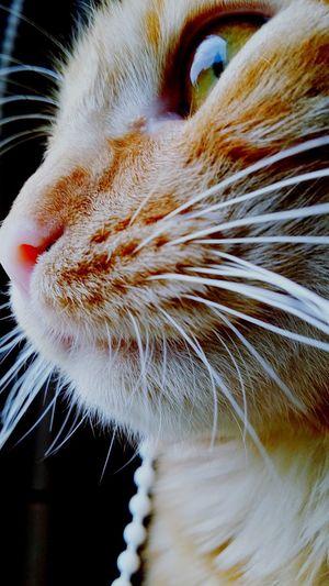Chat Animals Animal Photography Cats Roux Companion Photography Photo