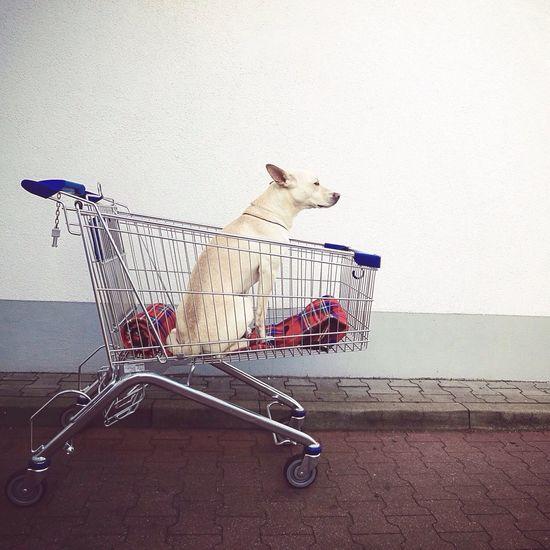Shopping day I Love My Dog EyeEm Best Shots My Best Photo 2014 Market Bestsellers 2017