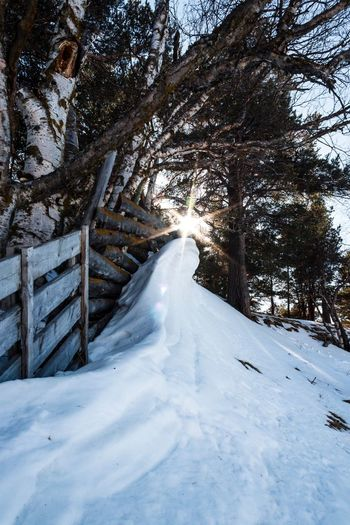 Sunshine through Sunshine Snow Cold Temperature Winter Tree Plant Nature Beauty In Nature Day Direction Tranquility No People Land Diminishing Perspective Scenics - Nature Tranquil Scene Outdoors