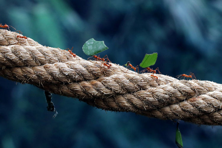 Traffic on the bridge Beauty In Nature Natural Beauty Macro Photography Leaves Rope Insect Ant Nature My Best Photo