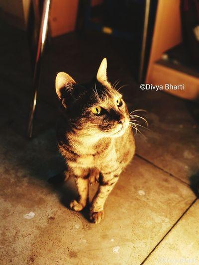 meow... #cat EyeEmNewHere EyeEm Best Shots #silent #stare #Pose Domestic Cat Pets Feline Domestic Animals Animal Themes One Animal Indoors  EyeEm Ready   AI Now