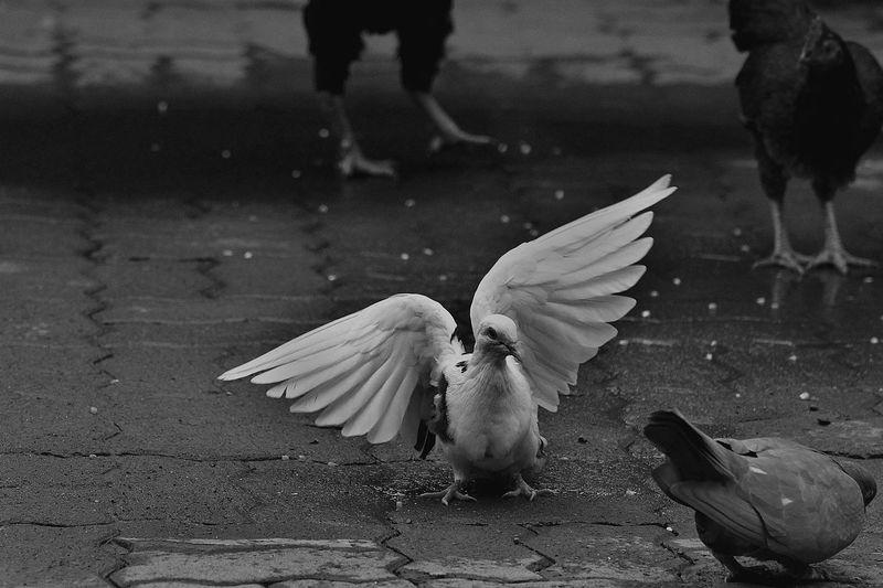 Birds on footpath