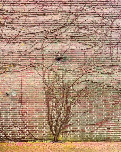 Tree of life. Tree Resilience  Wall Branches Chosen Paths Brick Wall Climbing Trees Growing Up Diversity