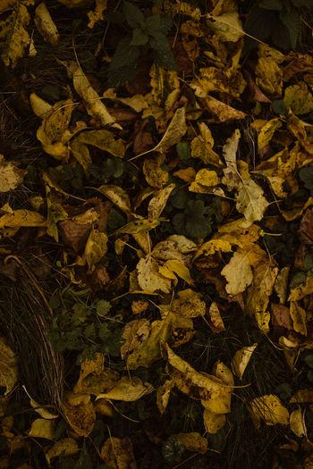 Full frame shot of dried leaves