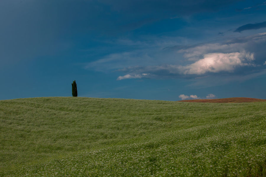 Val D'Orcia, Tuscany, Italy. Travelling through the countryside. Beauty In Nature Coutryside Field Fieldscape Green Hill Horizon Over Land Italia Italy Landscape Nature No People Non Urban Scene Non-urban Scene Scenics Solitude Tranquil Scene Tranquility Tranquility Tree Tuscany