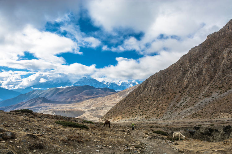 Tourists on the trail around Annapurna, Nepal. Animal Animal Themes Beauty In Nature Cloud - Sky Day Domestic Domestic Animals Environment Landscape Livestock Mammal Mountain Mountain Peak Mountain Range Nature No People Non-urban Scene Outdoors Pets Scenics - Nature Sky Tranquil Scene