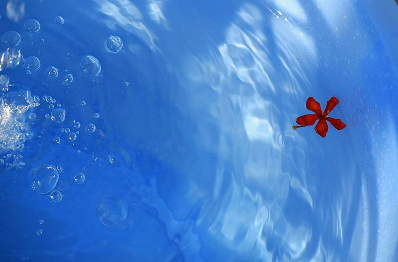 Directly below shot of red flower floating on water against sky
