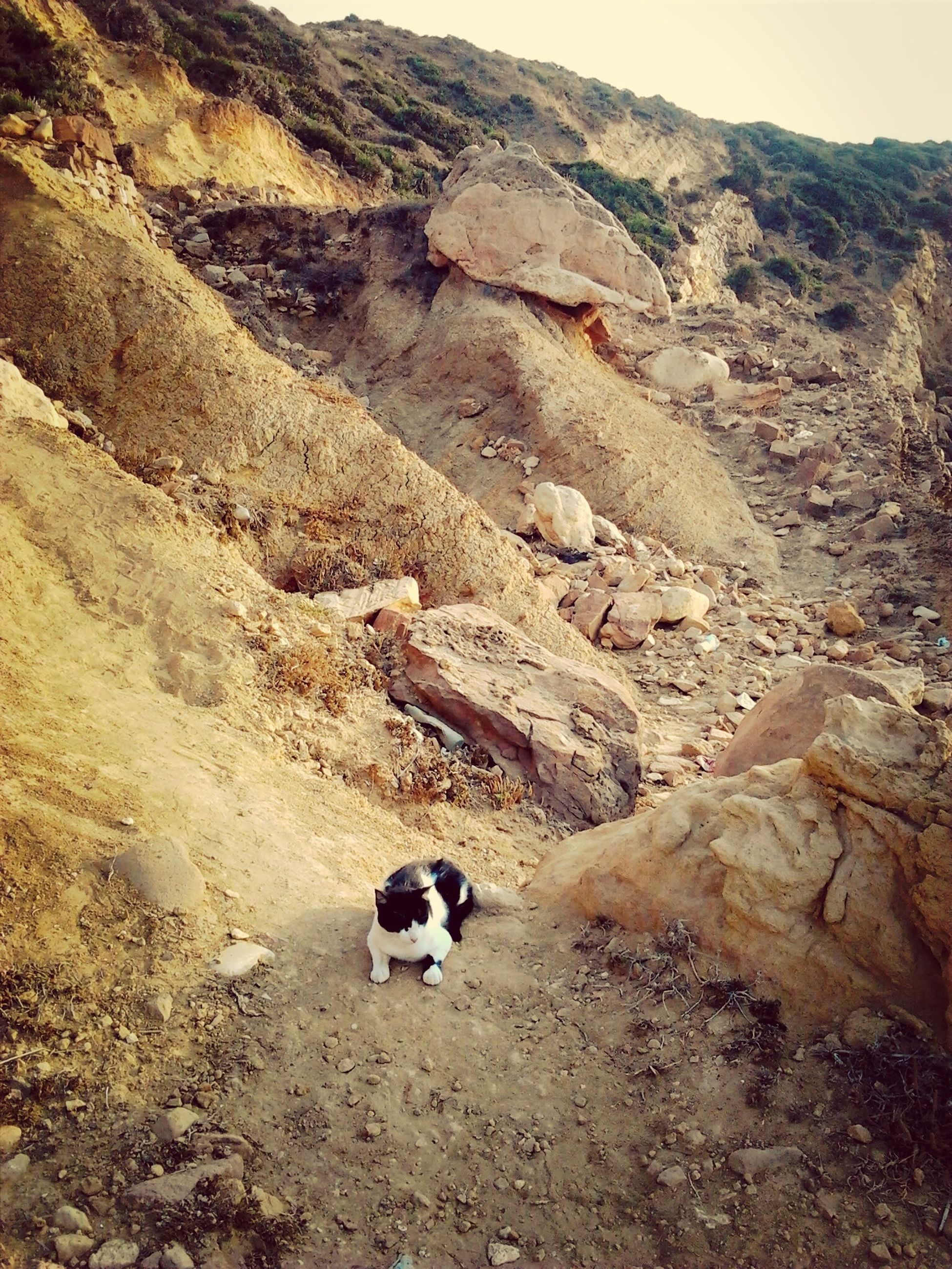 domestic animals, landscape, mountain, rock - object, mammal, animal themes, nature, dirt road, dog, high angle view, non-urban scene, tranquility, tranquil scene, day, one animal, outdoors, dirt, rock formation, field, pets