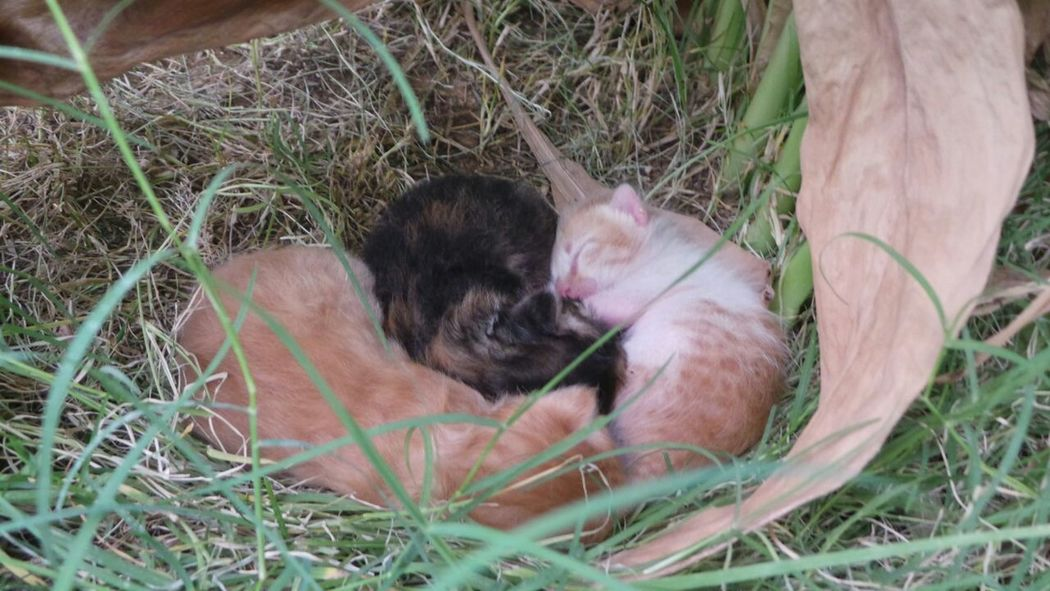I found them in my Garden ! Tiny And Adorable Cuddlin Kittens Cute Kittens