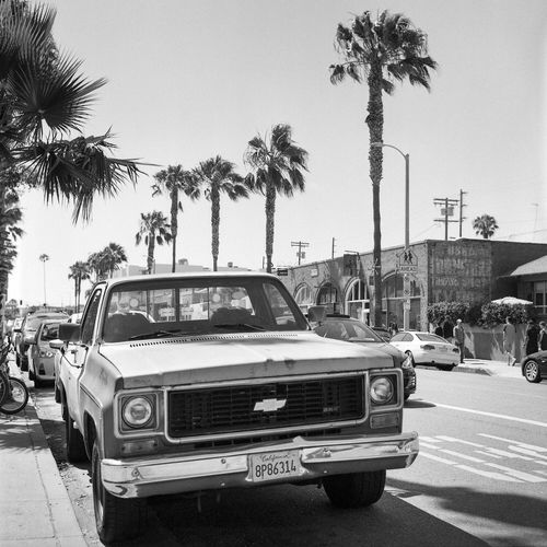 Chevy in Venice Palm Tree Car Street Transportation Land Vehicle Tree Mode Of Transport Clear Sky Outdoors City Day Beach Sky No People Chevy Truck Film Kodak Rolleiflex