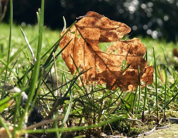 Alles hat ein Ende Leaf Dry Nature Autumn Grass Close-up Outdoors Change No People Day Beauty In Nature Fragility