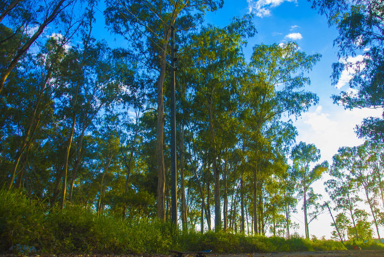Beauty In Nature Blue Branch Day Forest Green Color Growth Landscape Low Angle View Nature No People Outdoors Scenics Sky Tranquil Scene Tranquility Tree Tree Trunk