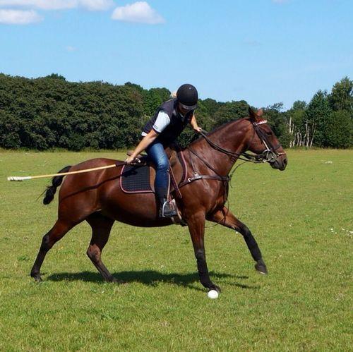 Polo Horses s Horses Horse I Love Horses