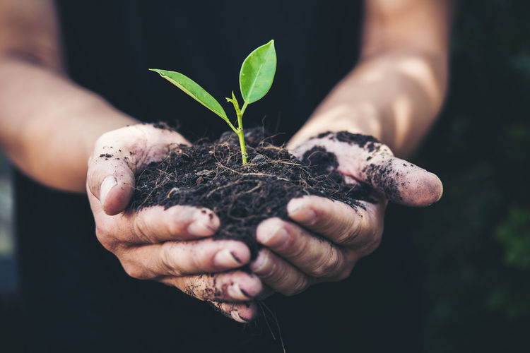 Beginnings Care Close-up Dirt Finger Fragility Gardening Growth Hand Hands Cupped Holding Human Body Part Human Hand Leaf Nature New Life One Person Outdoors Plant Plant Part Planting Real People Sapling Seedling Vulnerability