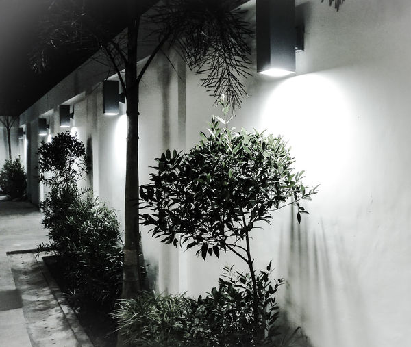 they call it black and white, I call plain luminance... Silver  Plain Luminarie Luminance Blackandwhite Photography Outdoor Photography Darkness And Light Nightphotography Night Lights Simple Photography Pointofview Scaled Indoors  Window Tree Home Interior Architecture Built Structure Shadow Illuminated