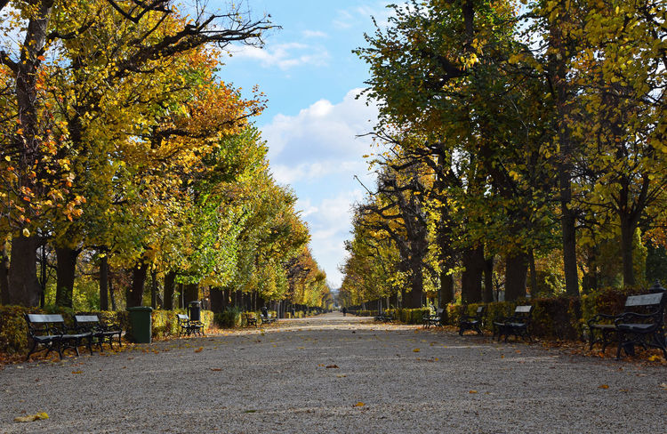 Beautiful autumn day in Shoenbrunn park, perspective Autumn Beauty In Nature Benches Blue Sky Change Colors Day Diminishing Perspective Fallen Leaves Good Weather Growth Leisure Activity Nature Nice Weather No People Outdoors Park Personal Perspective Perspective Scenics Season  Shönbrunn Tranquility Tree Walking