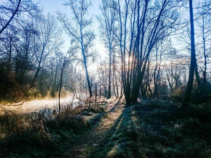 Walking Relaxing Nature. Trees Landscape Walking Around Light Up Your Life Sunrise Wood