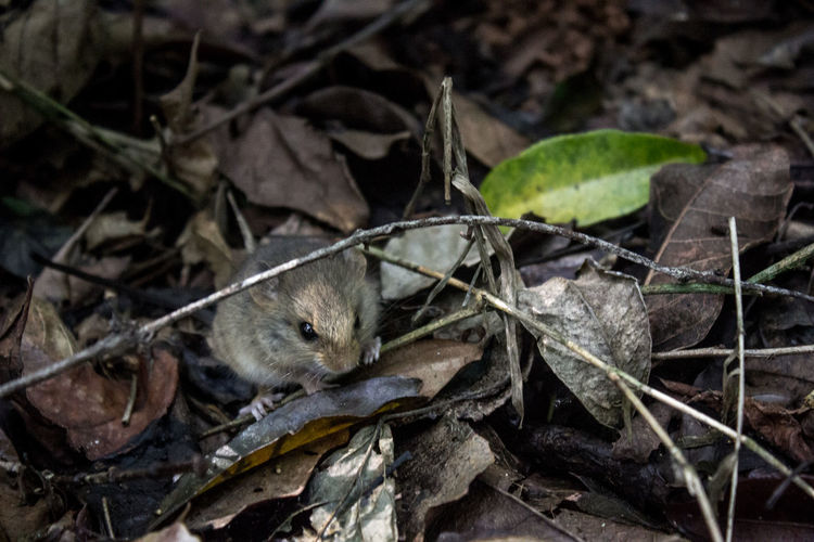 Animal Themes Animals In The Wild Branch Day Dry Focus On Foreground Leaf Messy Mouse Nature No People One Animal Perching Tranquility Wildlife Zoology