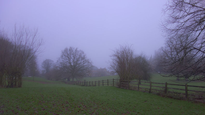 Foggy morning 2 Ely Cathedral Bare Tree Beauty In Nature Day Foggy Landscape Foggy Morning Grass Landscape Nature No People Outdoors Scenics Sky Tranquility Tree